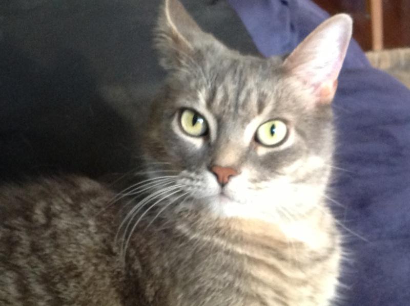 Voici mes chats 00910