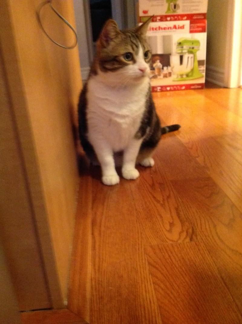 Voici mes chats 02110