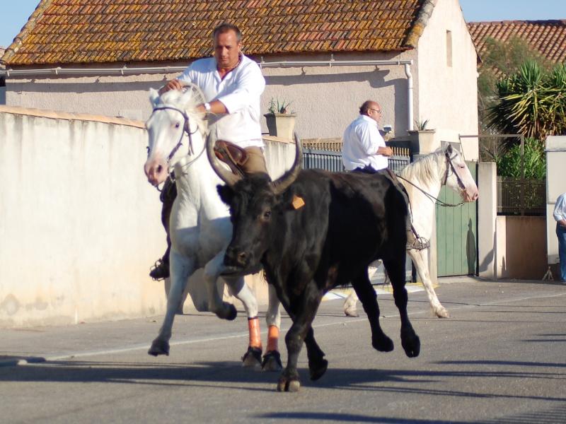 concours d'abrivado à gallician le 25/07/2010 Csc_0013