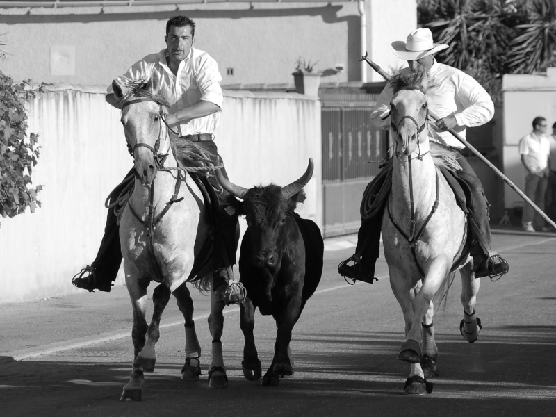 concours d'abrivado à gallician le 25/07/2010 Csc_0014