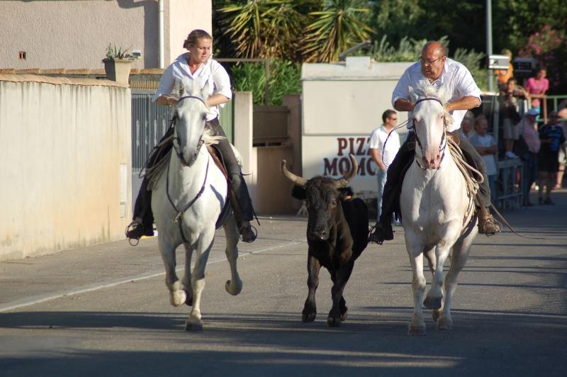 concours d'abrivado à gallician le 25/07/2010 Dsc_0047