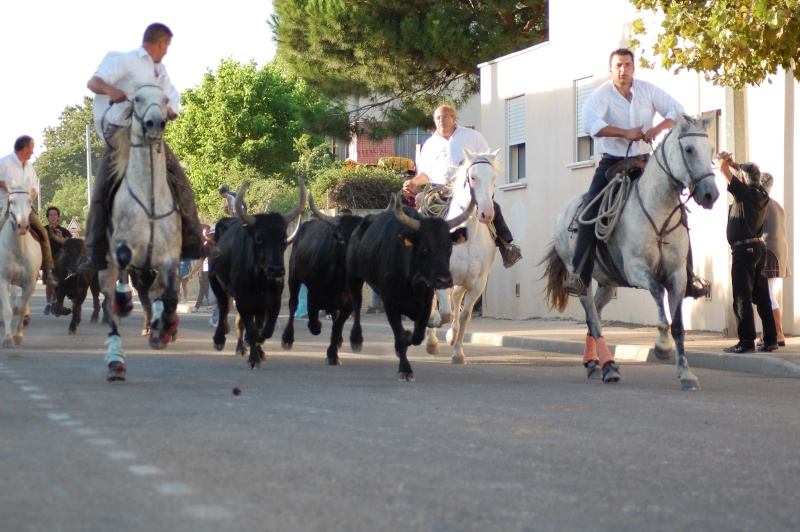 concours d'abrivado à gallician le 25/07/2010 Dsc_0048