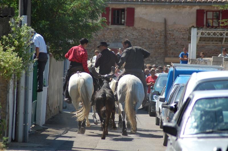 concours d'abrivado à gallician le 25/07/2010 Dsc_0049