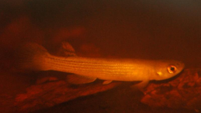 Poisson du Pérou Dsc04110