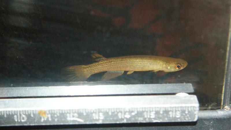 Poisson du Pérou Dsc04211