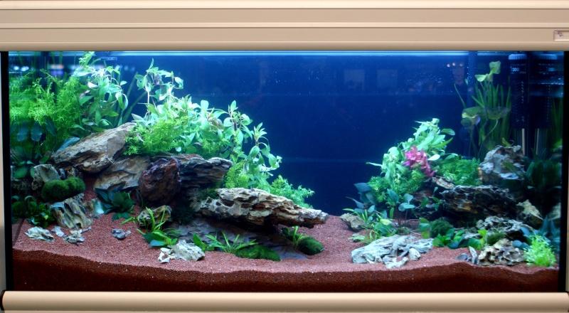 World Aquarium Design Contest Final 2010 JBL Dsc08210