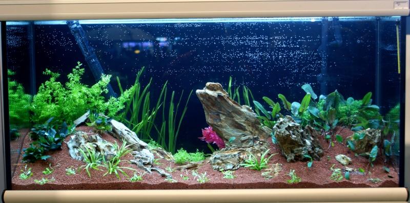 World Aquarium Design Contest Final 2010 JBL Dsc08214