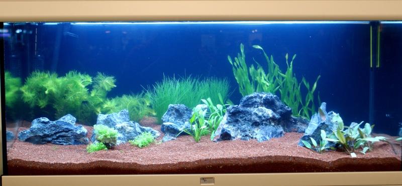 World Aquarium Design Contest Final 2010 JBL Dsc08215