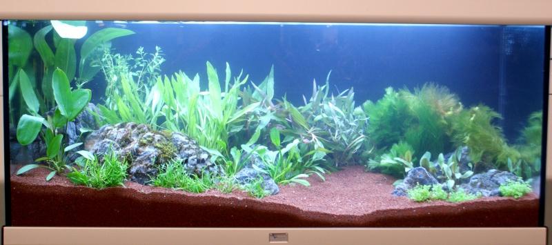 World Aquarium Design Contest Final 2010 JBL Dsc08216
