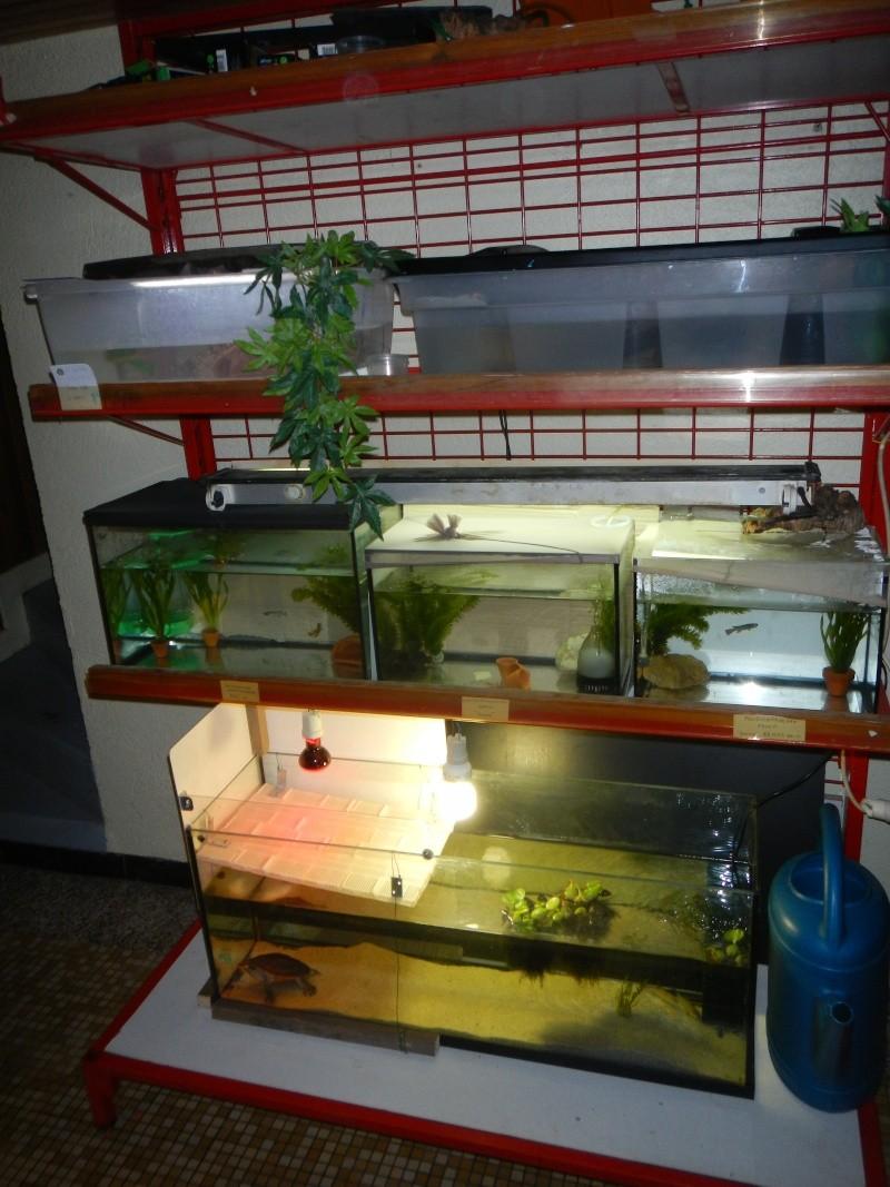 Chez Aquarioguppy Dscn6027