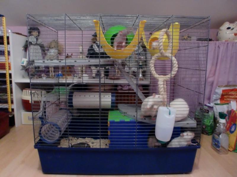 {Recherche} cage 2 rats RP 00612