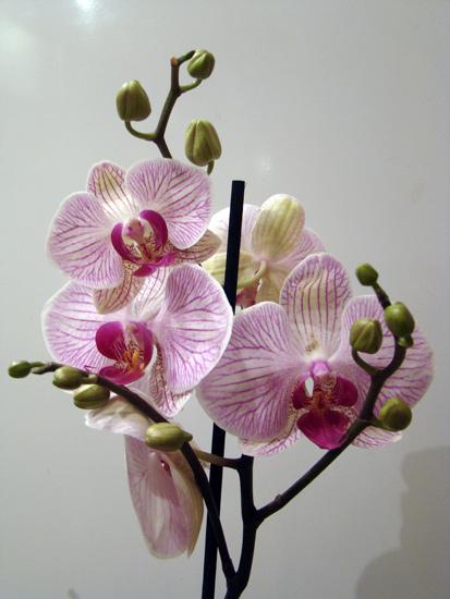 Разведение орхидей. - Страница 3 10861010