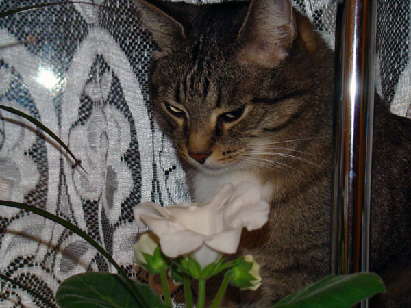 7. Растения и животные Dsc00710