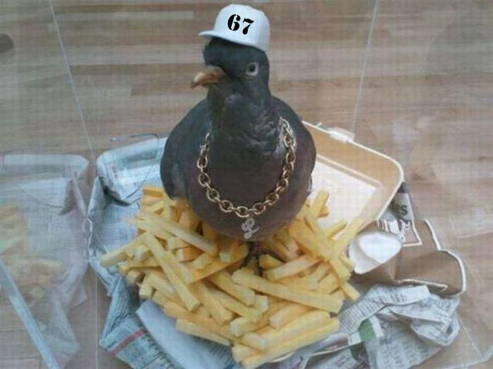Les pêcheurs du 67 sont-ils des pigeons... ? Pigeon10