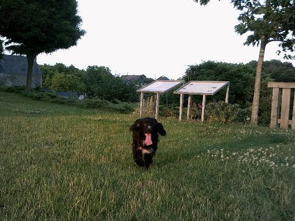 Photo de nos chiens batards! Earl_j14