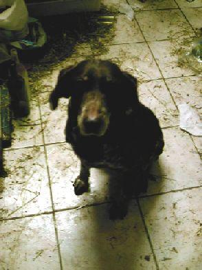 """Photos de vos chiens """"malheureux"""" Texane10"""