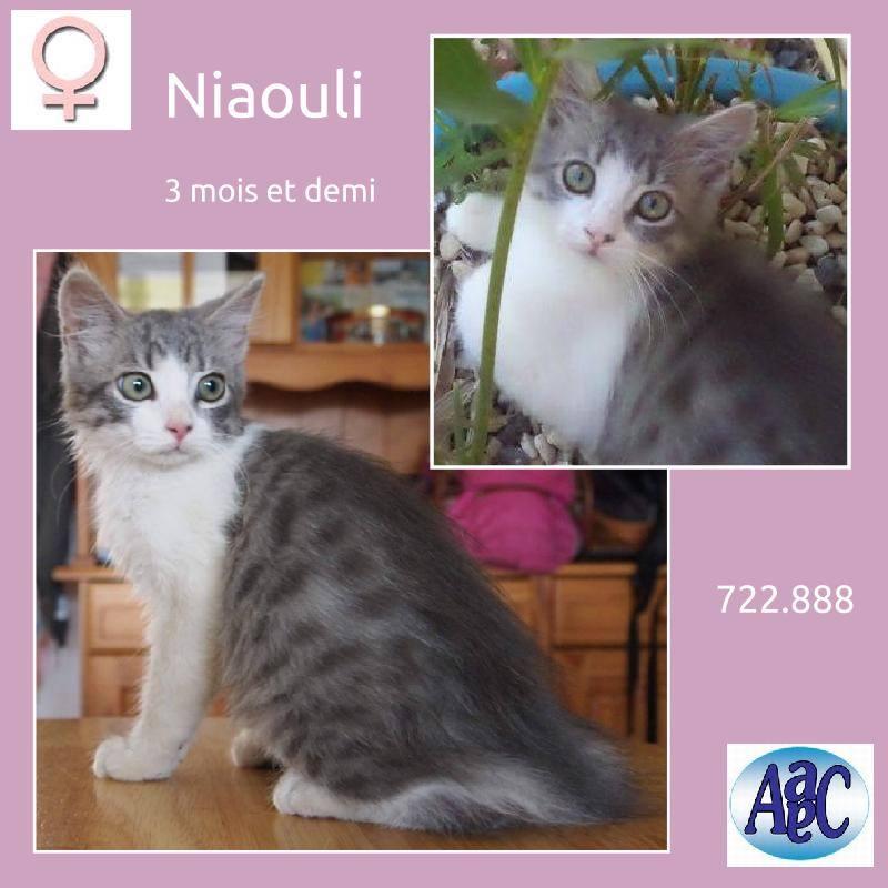 Niaouli 3mois et demi 10961910