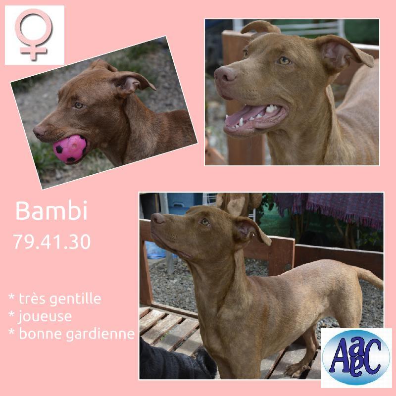 Bambi la rennaissance  Bambi10