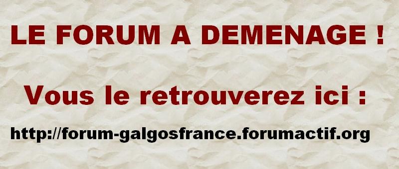 Galgos France