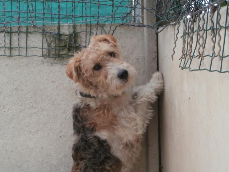 Shumi (Fox mâle) P7170010