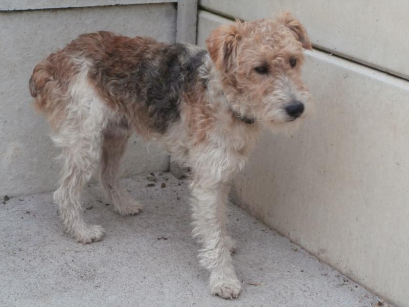 Shumi (Fox mâle) P7170013