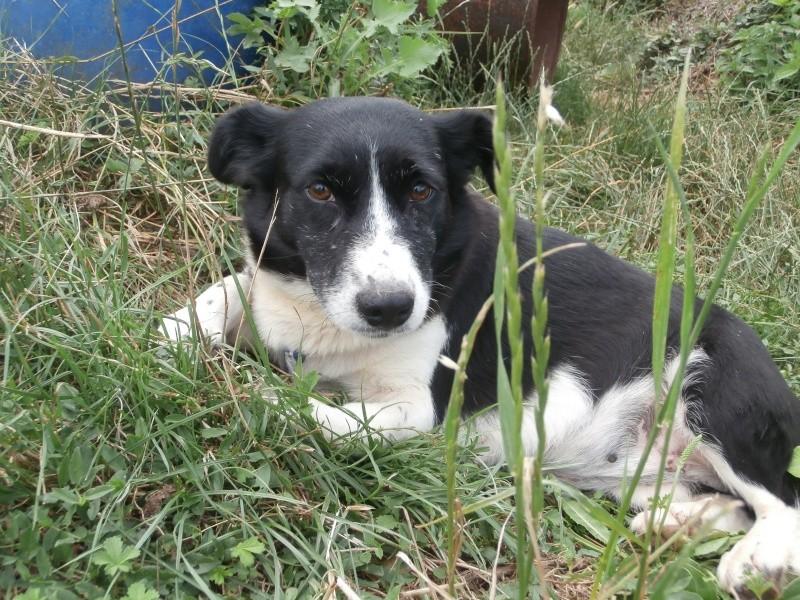YOOPY (femelle croisée beagle) P7200017
