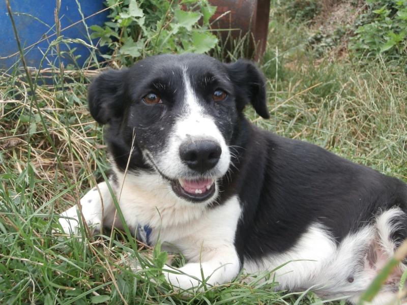 YOOPY (femelle croisée beagle) P7200019