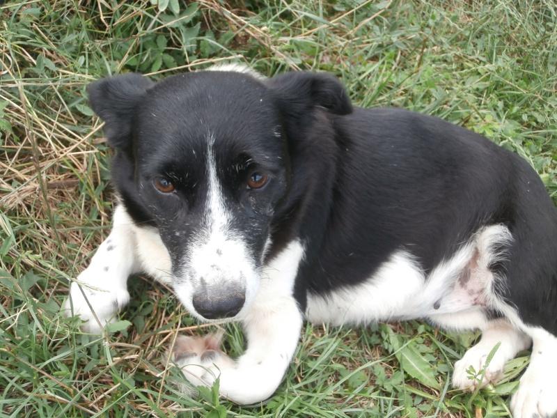 YOOPY (femelle croisée beagle) P7200022