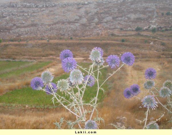 رحلة الى لبنان 1reogl10