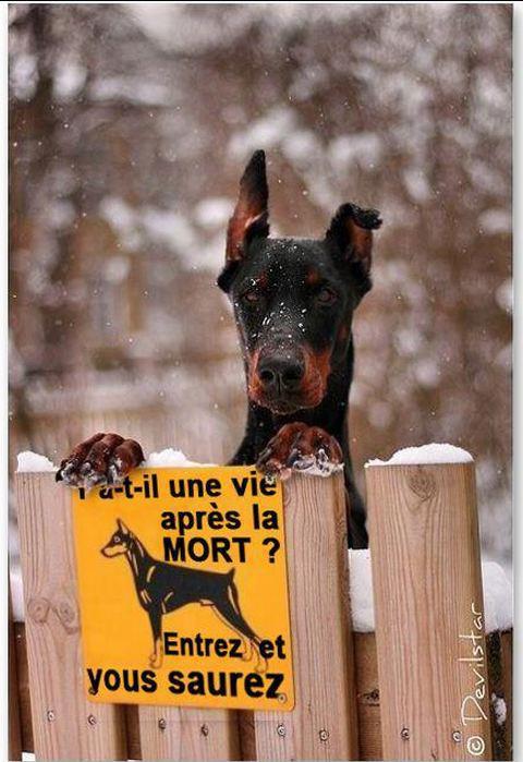 "Pancartes ""Attention, chien méchant!"" - Page 2 29463111"