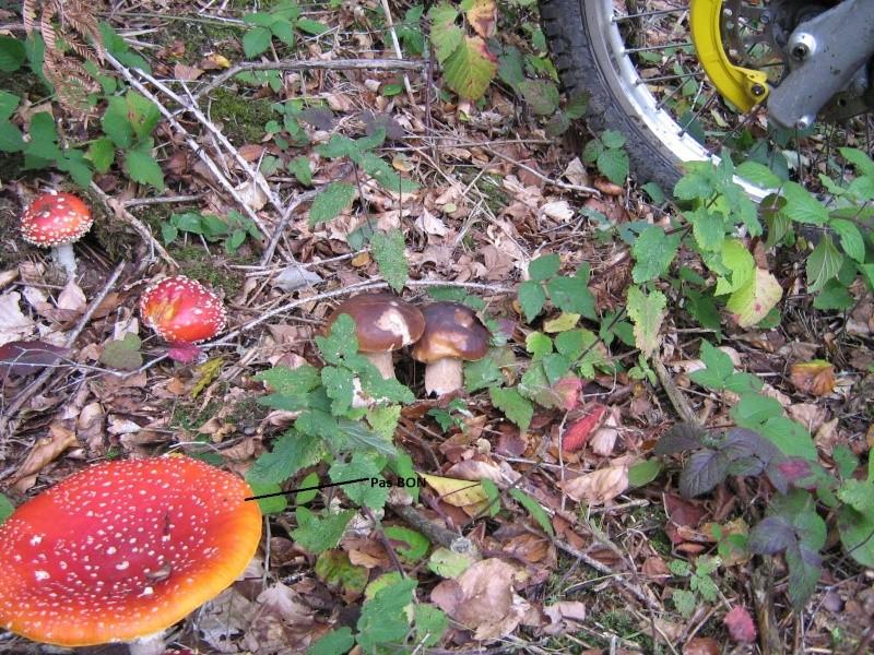 Ballade dans les bois ................... Img_2233