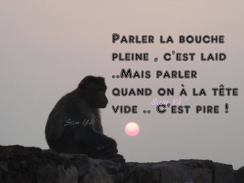 Vos citations du moment  - Page 2 10931610