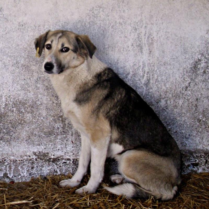 LUCILLE - femelle croisée de taille moyenne, née en 2012 - ( PASCANI )  - réservée adoption par ladyly (22) - décédée 16609310