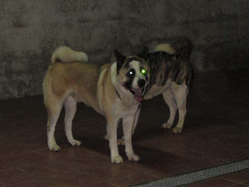 21e portée de Ludsyga : Cybelle x Kiyoshi (22/11/12) - pour moi 2012-836