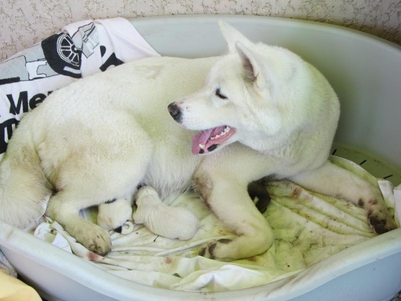 26e Portée de Ludsyga : Yuki x Nato (09/07/13) - pour les maitres de Yuki 2013-130