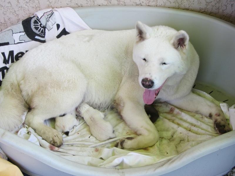 26e Portée de Ludsyga : Yuki x Nato (09/07/13) - pour les maitres de Yuki 2013-131