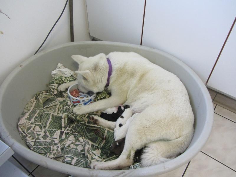 26e Portée de Ludsyga : Yuki x Nato (09/07/13) - pour les maitres de Yuki 2013-133
