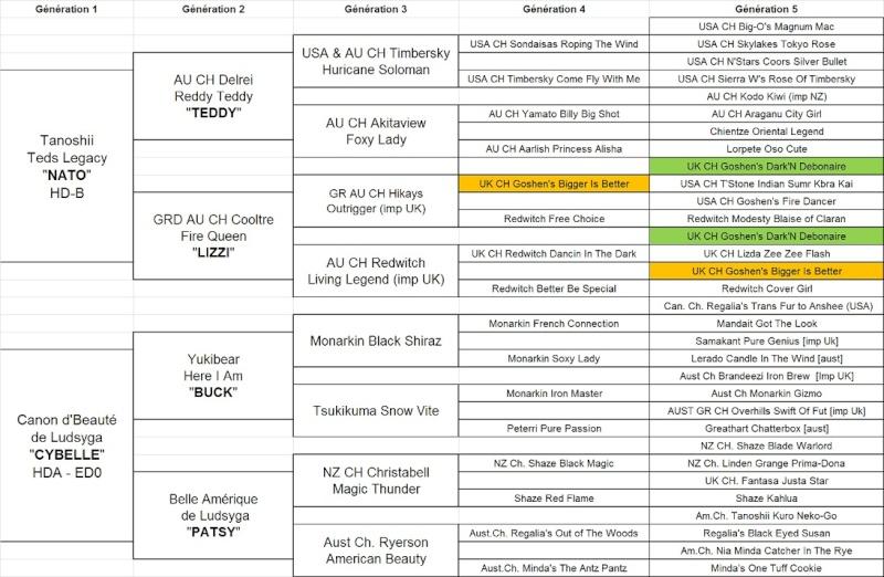 21e portée de Ludsyga : Cybelle x Kiyoshi (22/11/12) - pour moi Ped5_c10