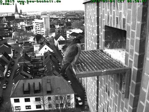 Diversen Duitsland 2015: Oberhausen/Mülheim/Karlsruhe/Bocholt e.a. - Pagina 3 Webcam13