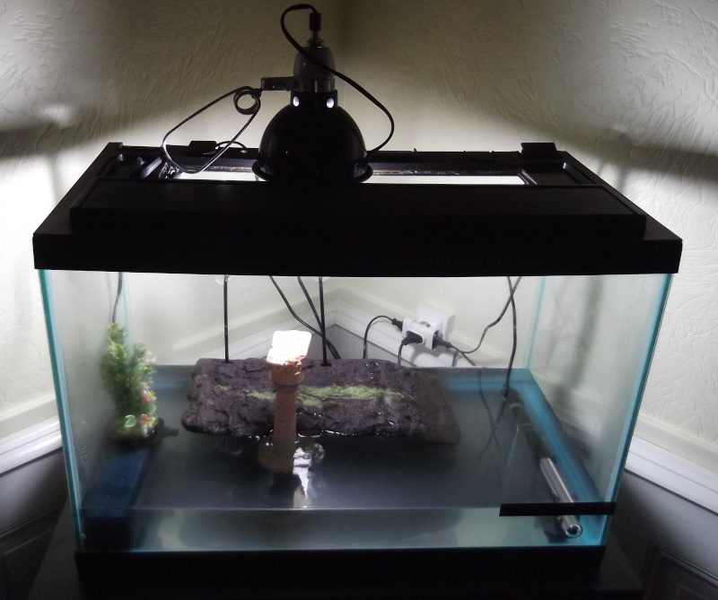 Le paradis des tortues Dscf4310