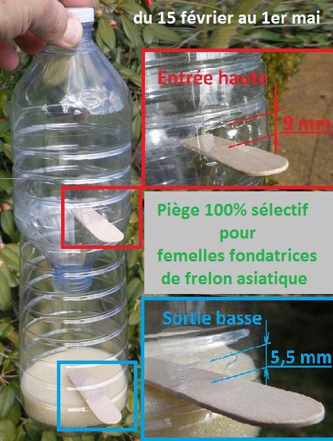 Sauvez les abeilles, piégez les Frelons Asiatiques  Pieege10