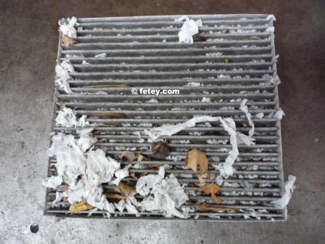 Nid de poule vs nid de souris P1080310