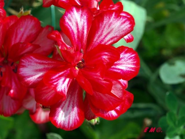 Macro photo de fleurs Copie_11