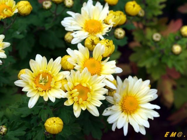 Macro photo de fleurs Photo_13