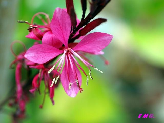 Macro photo de fleurs Photo_14