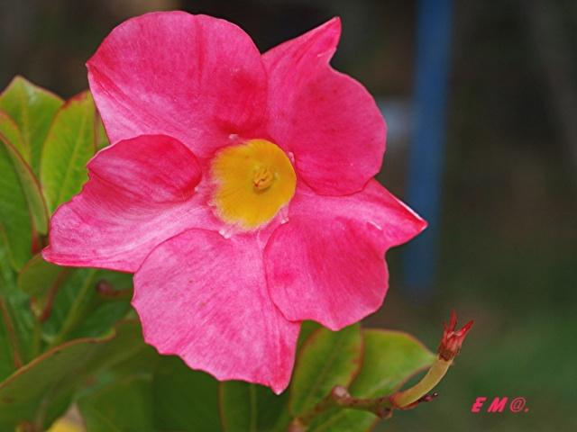 Macro photo de fleurs Photo_15