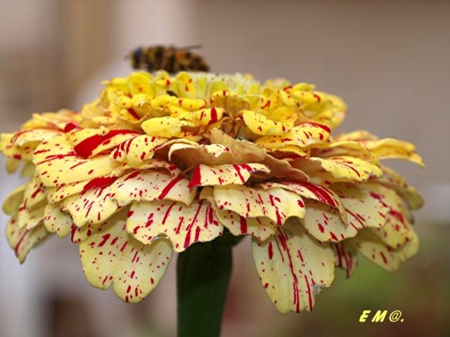 Macro photo de fleurs Photo_16