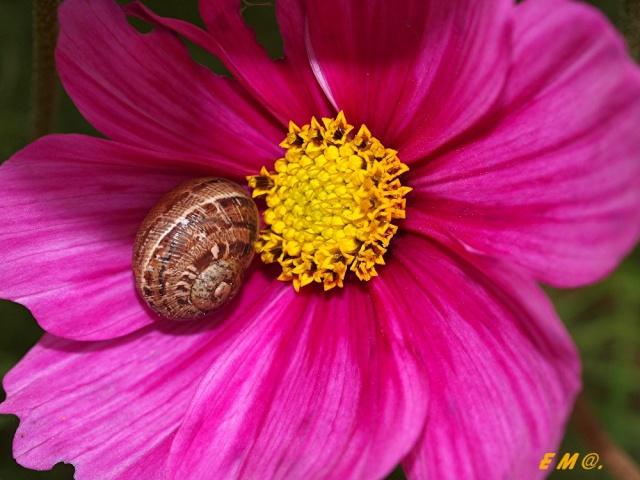 Macro photo de fleurs Photo_18