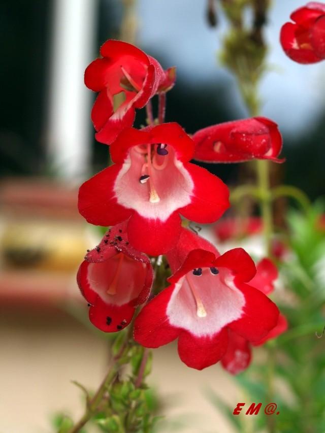 Macro photo de fleurs Photo_21
