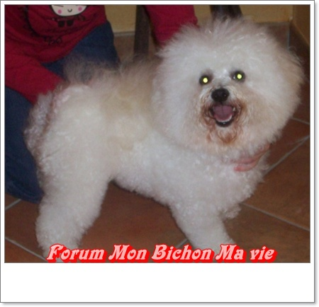 Album photos des bichons Duches10